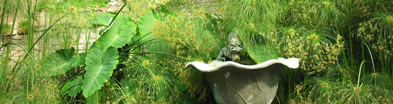 Fountain of the Dragon - Giardini Botanici Hanbury